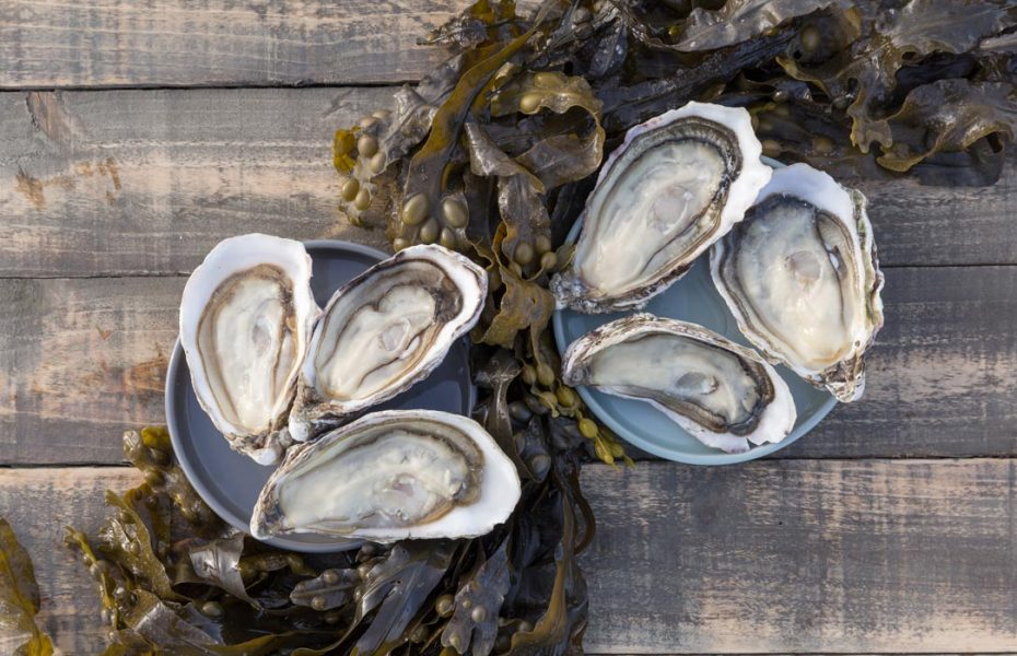 Cooley-Oysters-41