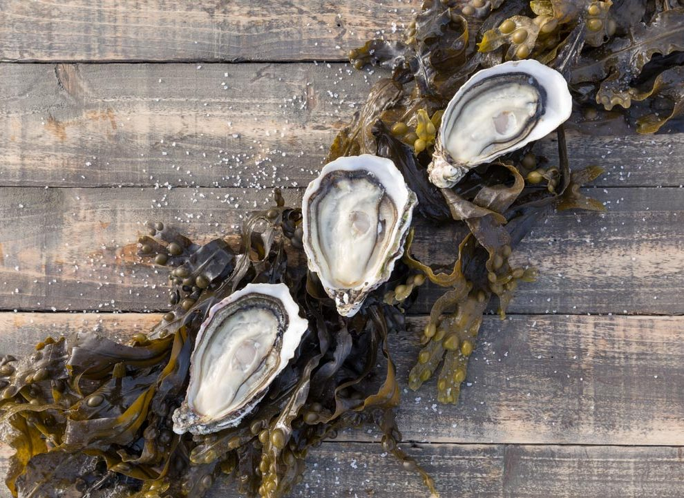 Cooley-Oysters-43