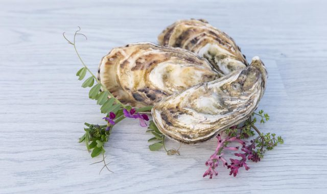 Cooley-Oysters-46